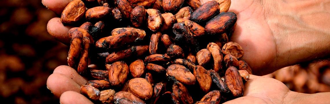 Cacao et diabète de type II