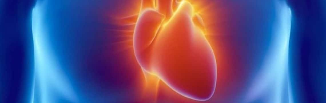 Magnésium et santé cardiovasculaire