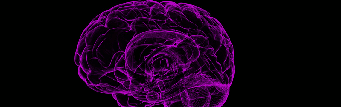 Vitamines B et santé du cerveau