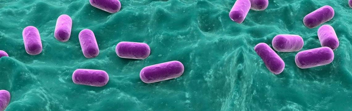 Probiotiques, germes de soja fermentés et cognition