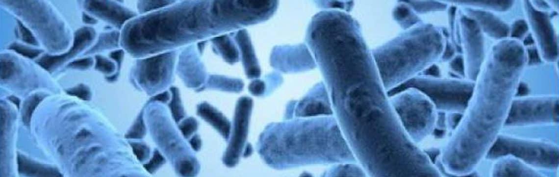 Anxiété et bactéries intestinales