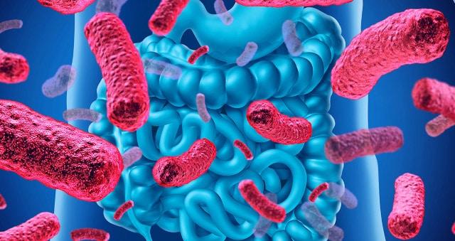 Probiotiques et rhinite allergique