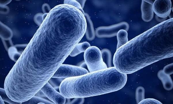 Probiotiques et maladie coronarienne